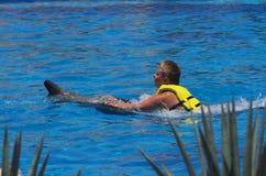 Natation avec des dauphins Image stock