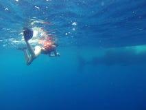 Natation avec des requins de baleine Images libres de droits