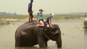 Natation avec l'éléphant banque de vidéos