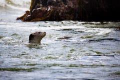 Natation dans l'océan Images stock