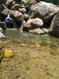 Natation dans le petit automne de l'eau photographie stock