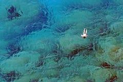 Natation dans les eaux de turquoise image libre de droits