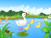 Natation de bande dessinée de famille de canard Photographie stock libre de droits