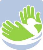 Natation de canard sauvage avec des mains Photos libres de droits