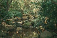 Natation de canard sauvage en rivière image libre de droits