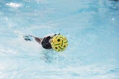 Natation de chien de Taureau de Français dans la piscine Image stock