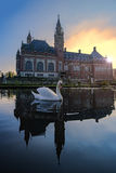 Natation de cygne dans le coucher du soleil d'automne photographie stock libre de droits