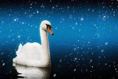 Natation de cygne dans une tempête de neige magique Nuit mystique Lac magique Image stock