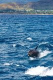 Natation de dauphin avec le bateau images libres de droits