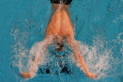 Natation de guindineau Photo stock