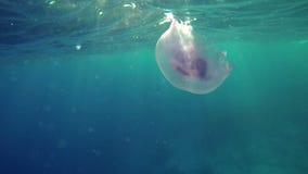 natation de méduses autour des personnes clips vidéos