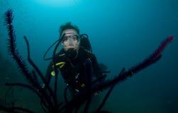 Natation de plongeur autonome de femme dans l'eau bleue claire Photo stock