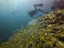 Natation de plongeur avec des poissons photographie stock libre de droits