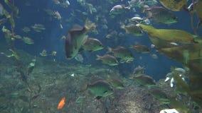 Natation de poissons dans l'aquarium banque de vidéos