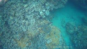 Natation de tortue de mer dans Maui banque de vidéos