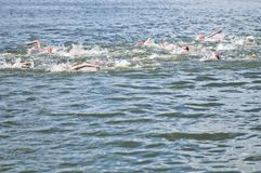 Natation en concurrence du chemin Photos libres de droits