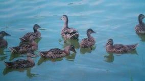 Natation en rivière Photo stock
