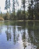Natation et réflexions de canards sur l'eau Photographie stock libre de droits