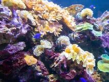 Natation exotique de poissons de mer dans un grand aquarium Images stock