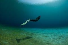 Natation sous-marine de plongeur Image stock