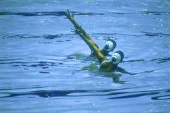 Natation synchronisée de la surface de l'eau Photographie stock