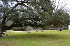 Natchez parkerar nationellt historiskt Royaltyfria Foton