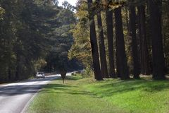 Natchez Trace Highway Royalty Free Stock Photos
