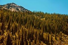 Nationaal Bos Stock Afbeeldingen