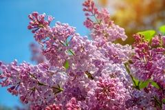 Nationaal dendrological park ` Sofiyivka `, Uman, de Oekraïne Sofiyivka is een toneeloriëntatiepunt van wereld het tuinieren ontw Royalty-vrije Stock Afbeeldingen