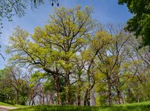 Nationaal dendroNational dendrological park ` Sofiyivka `, Uman, de Oekraïne Sofiyivka is een toneeloriëntatiepunt van wereld gar Royalty-vrije Stock Foto's