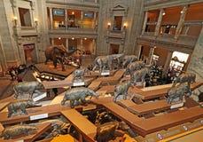 Nationaal museum van biologie Royalty-vrije Stock Afbeeldingen