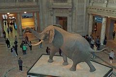 Nationaal museum van biologie Royalty-vrije Stock Fotografie