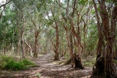 Nationaal oerwoud in Xuyen Moc District, Bedelaars Tau Vung Tau Province, Vietnam in het droge seizoen stock afbeeldingen