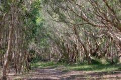 Nationaal oerwoud in Xuyen Moc District, Bedelaars Tau Vung Tau Province, Vietnam in het droge seizoen stock afbeelding