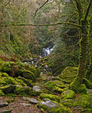 Nationaal Park 07 van Killarney Stock Foto