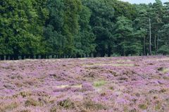 Nationaal park De Hoge Veluwe Obrazy Stock