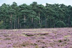 Nationaal park De Hoge Veluwe obrazy royalty free