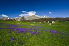 Nationaal park Durmitor bij de vroege lente, Montenegro Royalty-vrije Stock Foto's