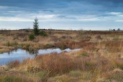 Nationaal Park Hautes Fagnes tijdens Daling van België Royalty-vrije Stock Afbeeldingen