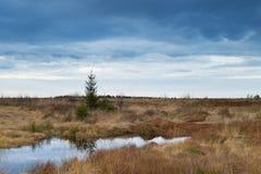 Nationaal Park Hautes Fagnes tijdens Daling van België Stock Afbeelding