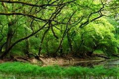 Nationaal Park Lunca Muresului Stock Afbeeldingen