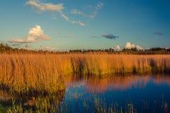 Nationaal Park, Reserve Royalty-vrije Stock Afbeeldingen