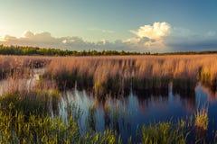 Nationaal Park, Reserve Royalty-vrije Stock Fotografie