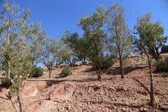 Nationaal Park Toubkal in Marokko Stock Afbeelding
