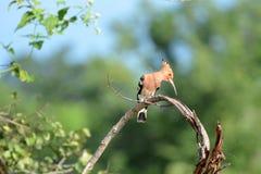 Nationaal park Uda Walawe Stock Foto's