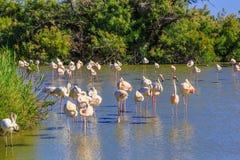 Nationaal Park van Camargue, de Provence Stock Foto's