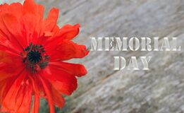 Free National American Holiday Memorial Day Text On Wooden Background With Red Poppy Flower Royalty Free Stock Image - 182169436