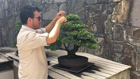 National Bonsai and Penjing Collection Canberra Australia