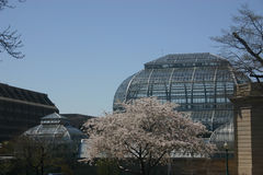 National botanical garden, washington, dc. With blossoming tree in front (spring Stock Photography