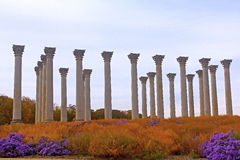 National Capitol Columns at sunset. The Capitol Columns designed as Corinthian columns in the Ellipse Meadow at the National Arboretum, Washington DC Royalty Free Stock Photography